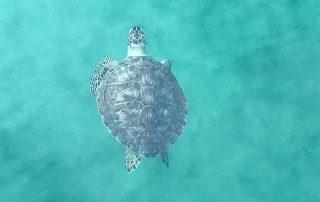 Sea Turtle Season Safety Tips